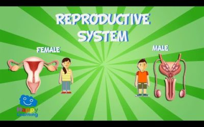 The human body reproduction