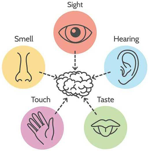 INTERACTION: The five senses