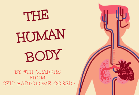 4th Graders Projects: Human body