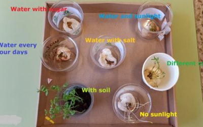 Natural Science: Plants